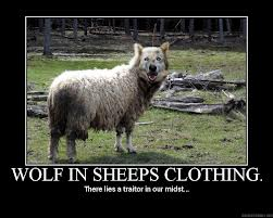 Wolf in sheep's clothing.jpg
